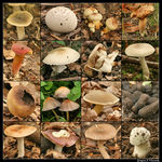 Title: Fungi of The Garden - Quiz