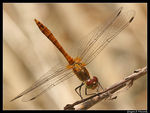 Title: Are You Ready To Fly?Canon EOS 400D