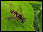 Title: Birthday Fly ;-) Camera: Canon Powershot S2-IS