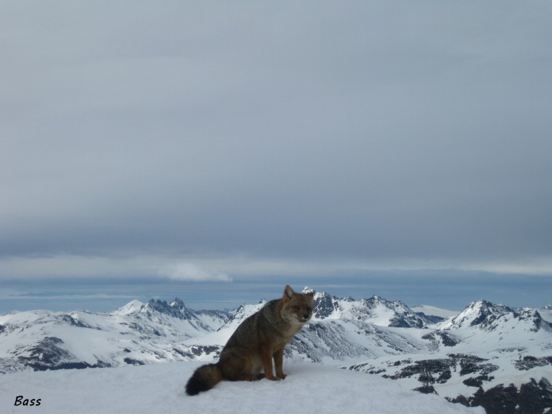 The king of the Summit