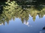 Title: Mirror or Pond?