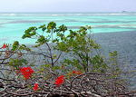 Title: Paradise Reef