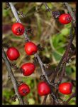 Title: only a few berries
