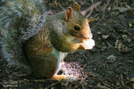 Title: Squirrel in the Light