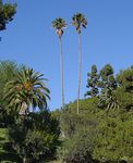Title: Palms of California