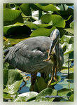 Title: The Heron and Frog