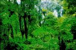Title: green forest