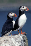 Title: Puffin world
