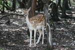 Title: Little DeerCanon 30 D