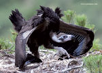 Title: baby_vulture