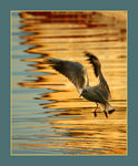 Title: rusty reflection and seagull