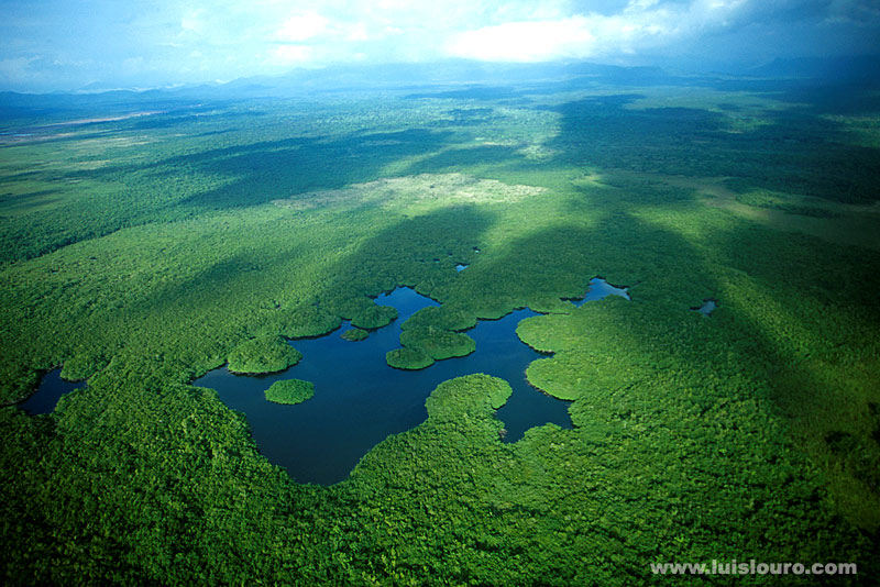 Belize forests