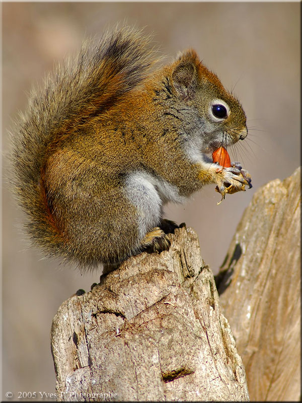 Nuts about Nuts ...