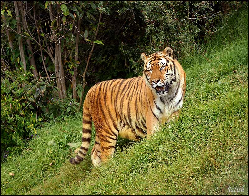 an introduction to the nature of the majestic tiger Welcome to nature @welcomet0nature the clearest way into the universe is through a forest wilderness ― john muir for daily updates about nature follow @welcomet0nature.