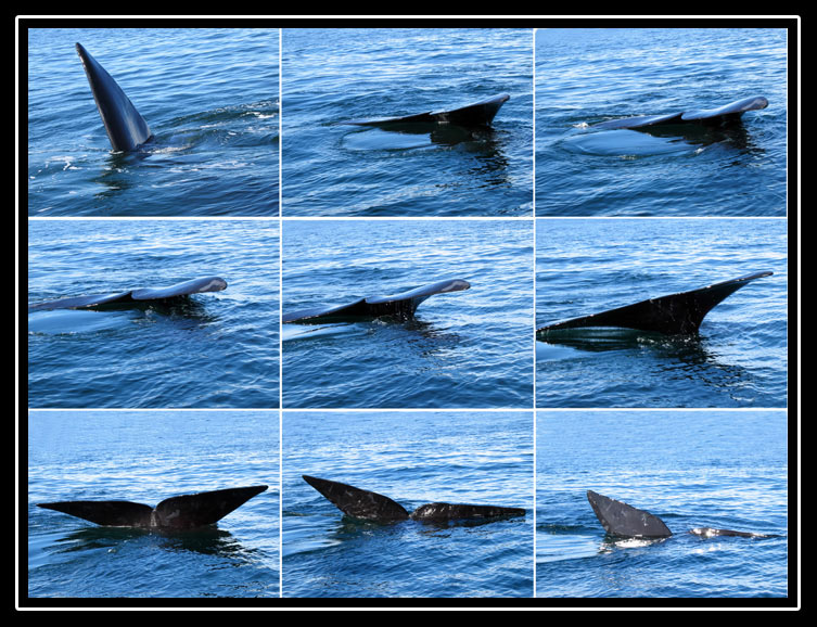 Whale Sequence