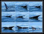 Title: Whale Sequence