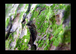 Title: Bark with Moss