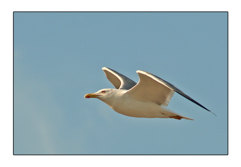 Bird and blue sky * for Asbed