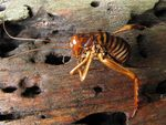 Title: This Is An Ex-Weta