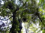 Title: Forest Canopy (for Grzegz)