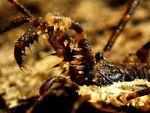 Title: Grotesque Harvestman