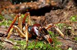 Title: Wellington Tree Weta