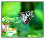 Title: Brown Butterfly no 2