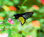 Title: Butterfly at Quezon National Park