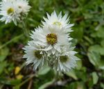 Title: rupin pass trek - white flower