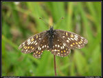 Title: Unknown Fritillary