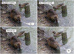 Title: Nutria Comic Strip
