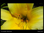 Title: yellow_flower