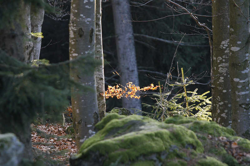 Sunlight in the forest