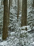 Title: Winter forest