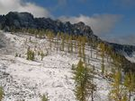 Title: Larches in the snow