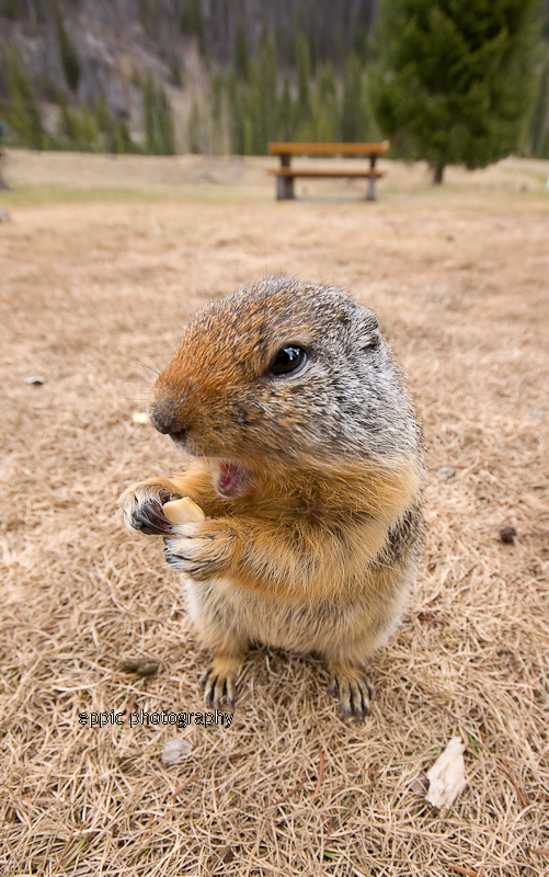 Squirrel with a treat