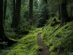 Title: Forest Trail