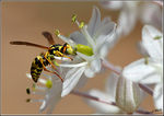 Title: Paper Wasp