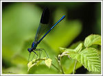 Title: Beautiful Damselfly