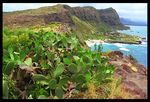 Title: Hawaii cactus and cliffs