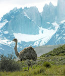 Title: Unnatural, yet so Patagonian