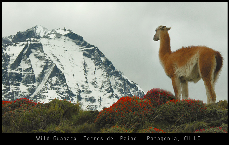 Back from PATAGONIA