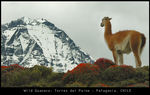 Title: Back from PATAGONIA