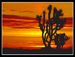 Title: Californian Desert Dawn
