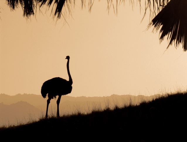 Majestic African Solitary