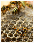 Title: wasp