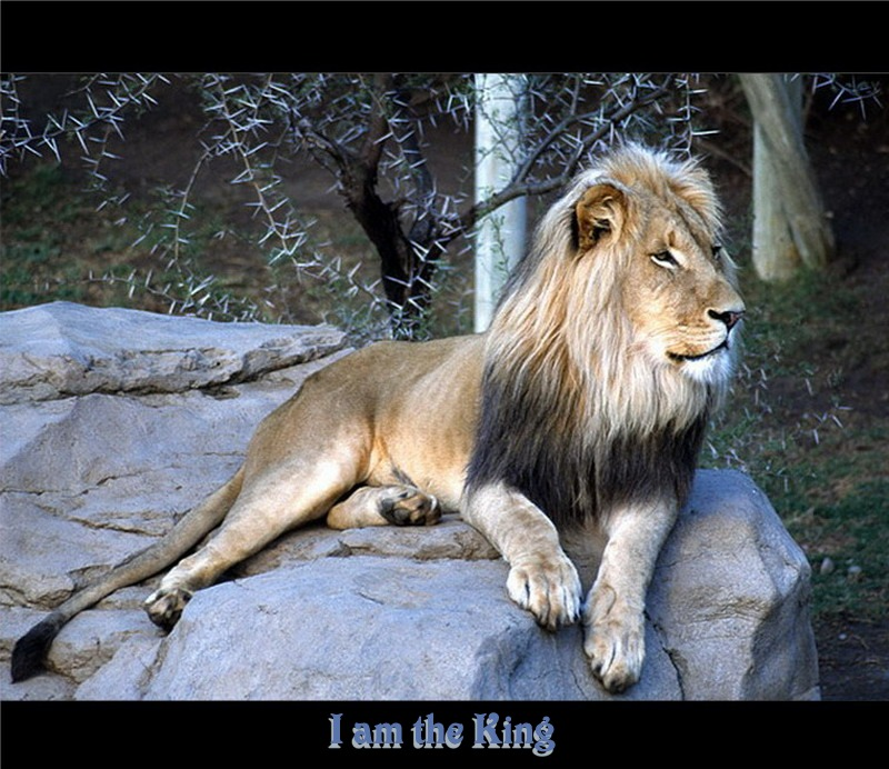 I'am the king