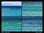 Title: ..::Whales::..