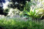 Title: Cape Town Botanical GardenNikon Coolpix 8700