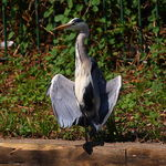 Title: Heron Flashing